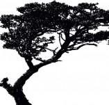 Дизайнерски печати и надписи за картички-Дървета