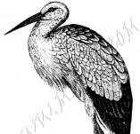 33/1000/Дизайнерски печати и надписи за картички-Птици-Щъркел