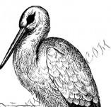 33/1001/Дизайнерски печати и надписи за картички-Птици-Щъркел в гнездо