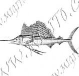 101/1088/Дизайнерски печати и надписи за картички-Морски-Риба