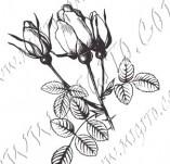 23/1094/Дизайнерски печати и надписи за картички-Цветя-Роза 1