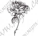 23/1096/Дизайнерски печати и надписи за картички-Цветя-Роза 3