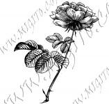 23/1101/Дизайнерски печати и надписи за картички-Цветя-Роза 8