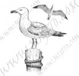 33/1121/Дизайнерски печати и надписи за картички-Птици-Гларуси