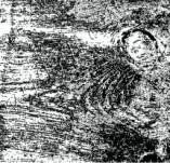 75/1123/Дизайнерски печати и надписи за картички-Фонови печати-Текстура на дърво 7