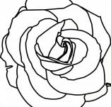 23/113/Дизайнерски печати и надписи за картички-Цветя-Печат роза 1