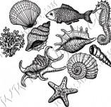 101/1159/Дизайнерски печати и надписи за картички-Морски-Сет миди и рапани