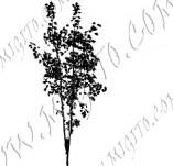 22/1168/Дизайнерски печати и надписи за картички-Дървета-Печат на дърво 9