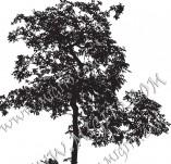 22/1170/Дизайнерски печати и надписи за картички-Дървета-Печат на дърво 10