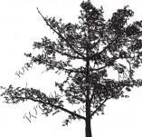 22/1171/Дизайнерски печати и надписи за картички-Дървета-Печат на дърво 11