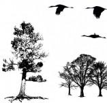 91/1238/Дизайнерски печати и надписи за картички-Направи си картина-Печат на дървета и птици за рисуване