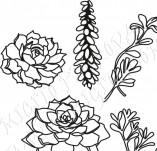 91/1239/Дизайнерски печати и надписи за картички-Направи си картина-Печат на сукулентни растения