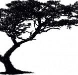 22/126/Дизайнерски печати и надписи за картички-Дървета-Печат на дърво 2