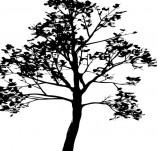 22/127/Дизайнерски печати и надписи за картички-Дървета-Печат на дърво 1