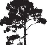 22/128/Дизайнерски печати и надписи за картички-Дървета-Печат на дърво 2
