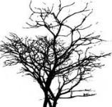 22/129/Дизайнерски печати и надписи за картички-Дървета-Печат на дърво 5