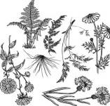 91/1299/Дизайнерски печати и надписи за картички-Направи си картина-Треви за картина