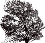 22/130/Дизайнерски печати и надписи за картички-Дървета-Печт на дърво 6