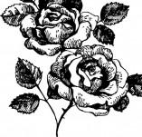 23/1300/Дизайнерски печати и надписи за картички-Цветя-Печат на роза 10