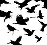 33/137/Дизайнерски печати и надписи за картички-Птици-Силуети на птици