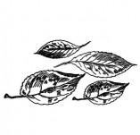 91/1790/Дизайнерски печати и надписи за картички-Направи си картина-Есенни листа 2