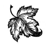 91/1791/Дизайнерски печати и надписи за картички-Направи си картина-Листо на клен печат
