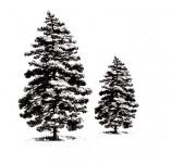 25/1805/Дизайнерски печати и надписи за картички-Нова Година-Печат на иглолистни дървета