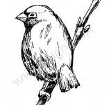 33/337/Дизайнерски печати и надписи за картички-Птици-Малко и настръхнало
