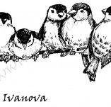 33/345/Дизайнерски печати и надписи за картички-Птици-Другарска раздумка