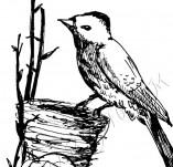 33/346/Дизайнерски печати и надписи за картички-Птици-Птиче с гнездо