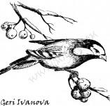 25/385/Дизайнерски печати и надписи за картички-Нова Година-Зима е