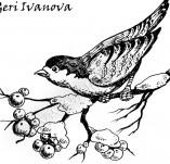 33/388/Дизайнерски печати и надписи за картички-Птици-Зима е 2