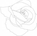 23/411/Дизайнерски печати и надписи за картички-Цветя-Печат на роза 5