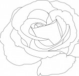 23/413/Дизайнерски печати и надписи за картички-Цветя-Печат на роза 7
