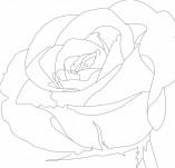 23/414/Дизайнерски печати и надписи за картички-Цветя-Печат на роза 8