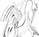 74/441/Дизайнерски печати и надписи за картички-Стилизирани-Птици печат