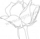 23/471/Дизайнерски печати и надписи за картички-Цветя-Печат на роза 9