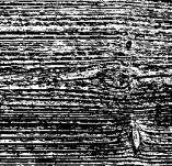75/550/Дизайнерски печати и надписи за картички-Фонови печати-Текстура на дърво 4