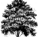 22/552/Дизайнерски печати и надписи за картички-Дървета-Печат на дърво 7