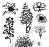 91/557/Дизайнерски печати и надписи за картички-Направи си картина-Полски растения