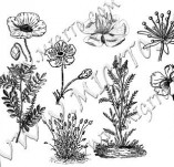 91/558/Дизайнерски печати и надписи за картички-Направи си картина-Печат на полски растения 2