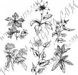 91/604/Дизайнерски печати и надписи за картички-Направи си картина-Полски цветя 3