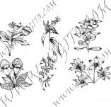 91/605/Дизайнерски печати и надписи за картички-Направи си картина-Полски цветя 4