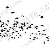 33/961/Дизайнерски печати и надписи за картички-Птици-Ято птици 2